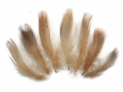 Golden Pheasant Complete Head 2 pcs ;C20302