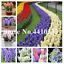 200 PCS Seeds Colorful Hyacinth Bonsai Perennial Flowers Potted Plants Rare New