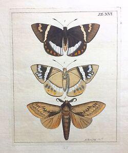 VERY-RARE-1770-Dru-DRURY-Vol-I-THREE-LEPIDOPTERA-Handcolored-Copper-Plate-XVI