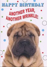 BIRTHDAY CARD 1STP/&P GREETING CARD FUNNY BOXER DOG HAPPY BEERDAY