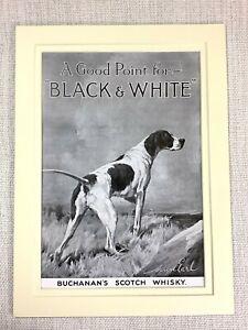 1915-Antique-Print-Pointer-Hound-Dog-Buchanan-039-s-Scotch-Whisky-Advert-Advertising