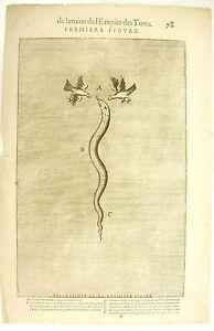 Nicolas-DE-NICOLAY-c-1650-de-la-ruine-de-l-039-Empire-des-Turcs-Serpent-et-corbeaux