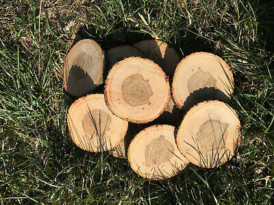 Esche Holzscheibe 10 Baumscheiben 20x2 cm