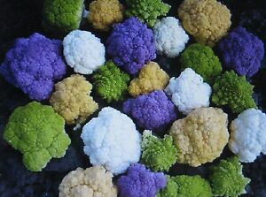 Rainbow-Blend-Cauliflower-Broccoli-Mixed-Colors-150-SEEDS-Healthful