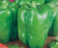 30++ Organic California Wonder Bell Pepper Seeds (Green Bell) SEEDS NON-GMO