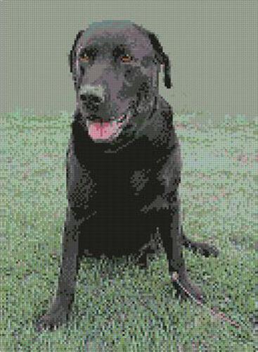 "Labrador Negro puntada cruzada contada Kit De 9 /""x 12,5/"" d2140"