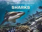 Science for Toddlers Ser.: Sharks by American Museum of Natural History Staff (2017, Children's Board Books)
