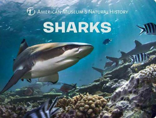 Science for Toddlers Ser.: Sharks by American Museum of Natural History Staff...