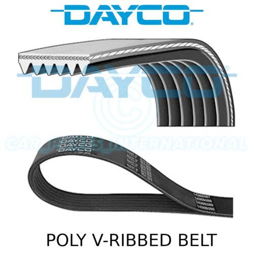 DAYCO Poly V-Courroie Auxiliaire Ventilateur 6PK1004K Drive 6 côtes Multi-Côtelé Ceinture