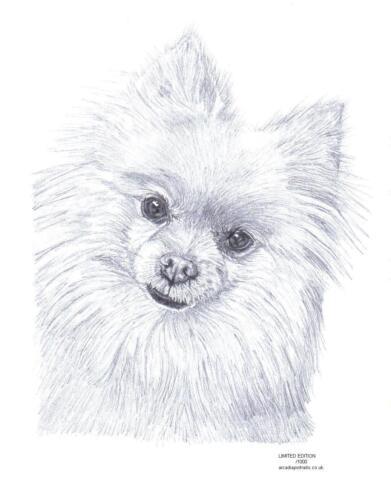 Pomerania Perro Ltd Edición De Arte Dibujo Impresión 2 Tamaños A4//A3 /& Nota tarjeta de saludos