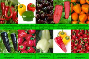 Suesse-Snack-Paprika-Samen-10-Sorten-Rot-Gelb-Gruen-Weiss-Braun-Schwarz-Orange