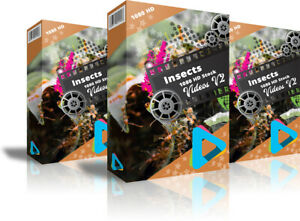 HD-1080-Royalty-Free-Stock-Footage-Videos-034-Insects-034-on-DvD-Rom