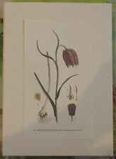 1964 Fritillaria Meleagris N°57 d'après les Originaux de Gaston Bonnier