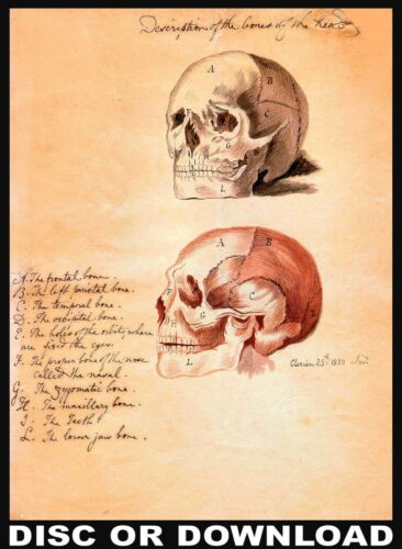 MAKE /& SELL ANTIQUE ANATOMY PRINTS Restored Image Collection by Timecamera
