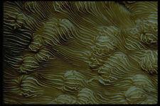 452058 Porcelain Coral A4 Photo Print