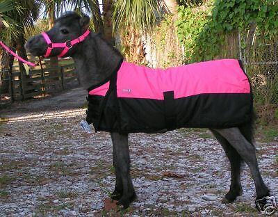 Miniature Mini HorseDonkey FOAL XXL Wtrprf Trnout Blanket for FOALS 38-43