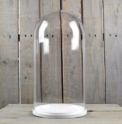 Grande Cupola Di Vetro Coperchio Cloche Display Con Base In Legno Bianco Altezza 46 Cm- In Corto Rifornimento