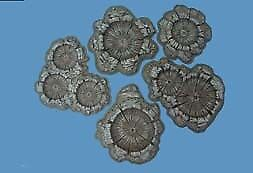 Pegasus Hobbies painted 28mm shell//bomb craters # 5215