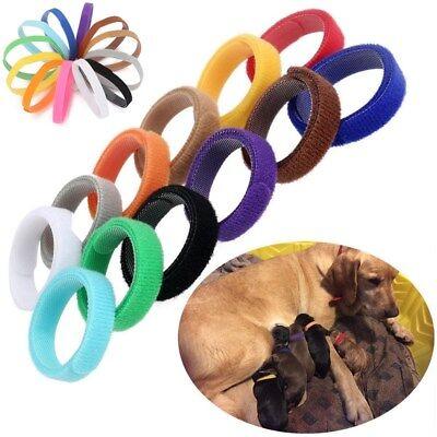 Nachdenklich ☞ 12 Farbe Welpen Id Halsband Welpenhalsband Halsbänder Für Katzen Hunde Katzen