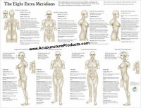 Eight Extra (extraordinary) Meridians Acupuncture Poster 18 X 24 Wall Chart