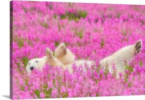 Polar-Bear-Waving-In-A-Bed-Of-Fireweed-Canvas-Art-Print