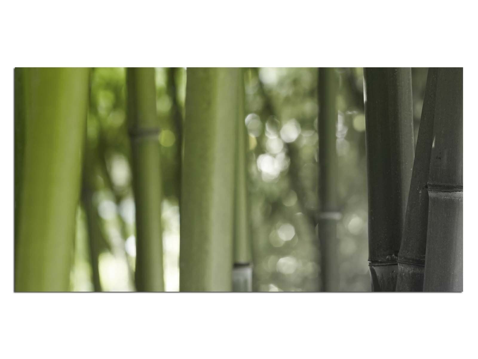Deco Glass Picture EG4100500638 BAMBOO FOREST GREEN Size 39,37  x 19,68  HD Prin