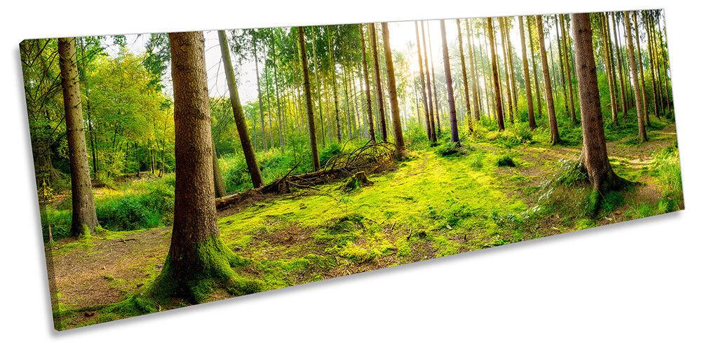 Forest Grün Sunset Trees Framed PANORAMA CANVAS Drucken Wand Kunst