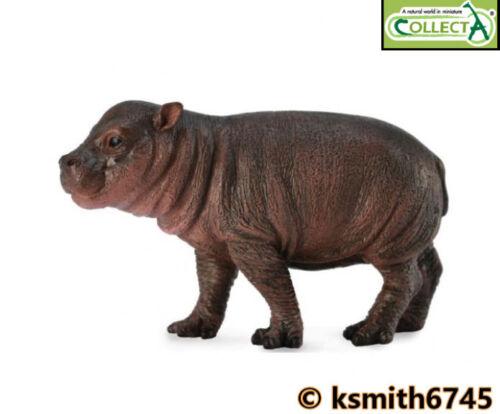 Collecta Pygmy Hippo veau solide Jouet en plastique Wild Zoo Animal Hippopotame New
