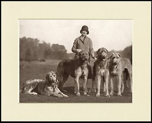 IRISH WOLFHOUND TWO DOGS LOVELY DOG PRINT MOUNTED READY TO FRAME