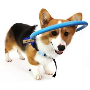 Pet-Dog-Safe-Halo-Guide-Training-Behavior-Aid-For-Blind-Dogs-Protect-Angel-Wings