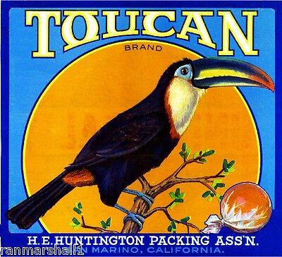 San Marino Los Angeles County Toucan Bird Orange Citrus Fruit Crate Label Print