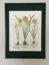 Besler Wall art - 50x70cm, vintage botanical wall art, 80's flower prints