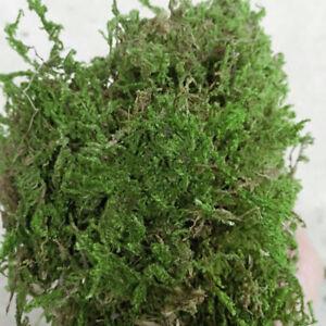 100 G Sèche Artificielle Renne Mousse Doublure Micro Paysage Fleur Artisanat-afficher Le Titre D'origine Couleurs Fantaisie