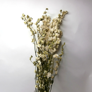 Dried flowers white delphinium bouquet larkspur flower bunch image is loading dried flowers white delphinium bouquet larkspur flower bunch mightylinksfo
