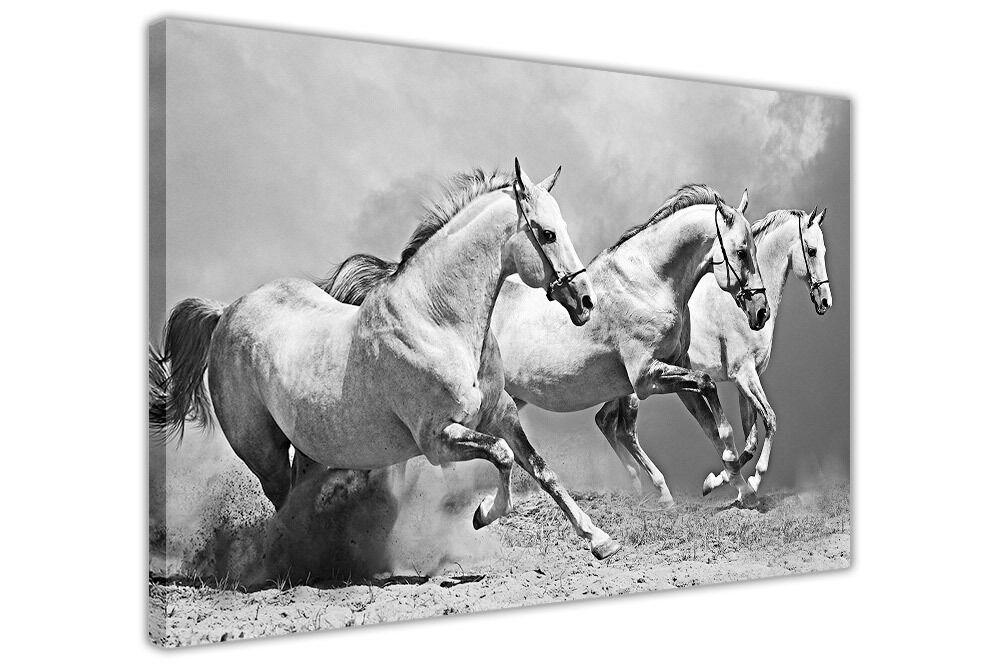 CAVALLI BIANCO SU SU SU CANVAS Wall Art Foto Animali Stampa Casa Decorazione Foto ded868