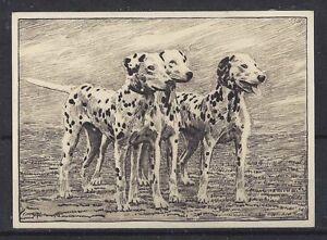 NEW U Dalmatian German MATTED Dog Art Print