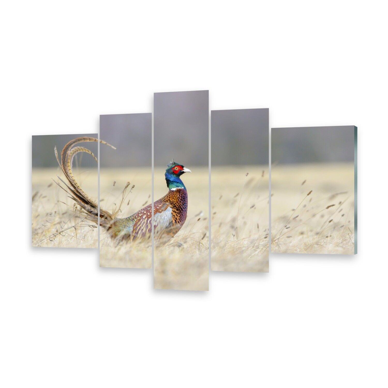 Mehrteilige Bilder Glasbilder Wandbild Fasan