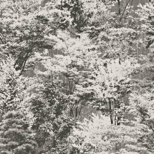 Behangrollen Crown Luxury Vinyl Wallpaper Charcoal White Sycamore Tree Forest Shimmer M1334