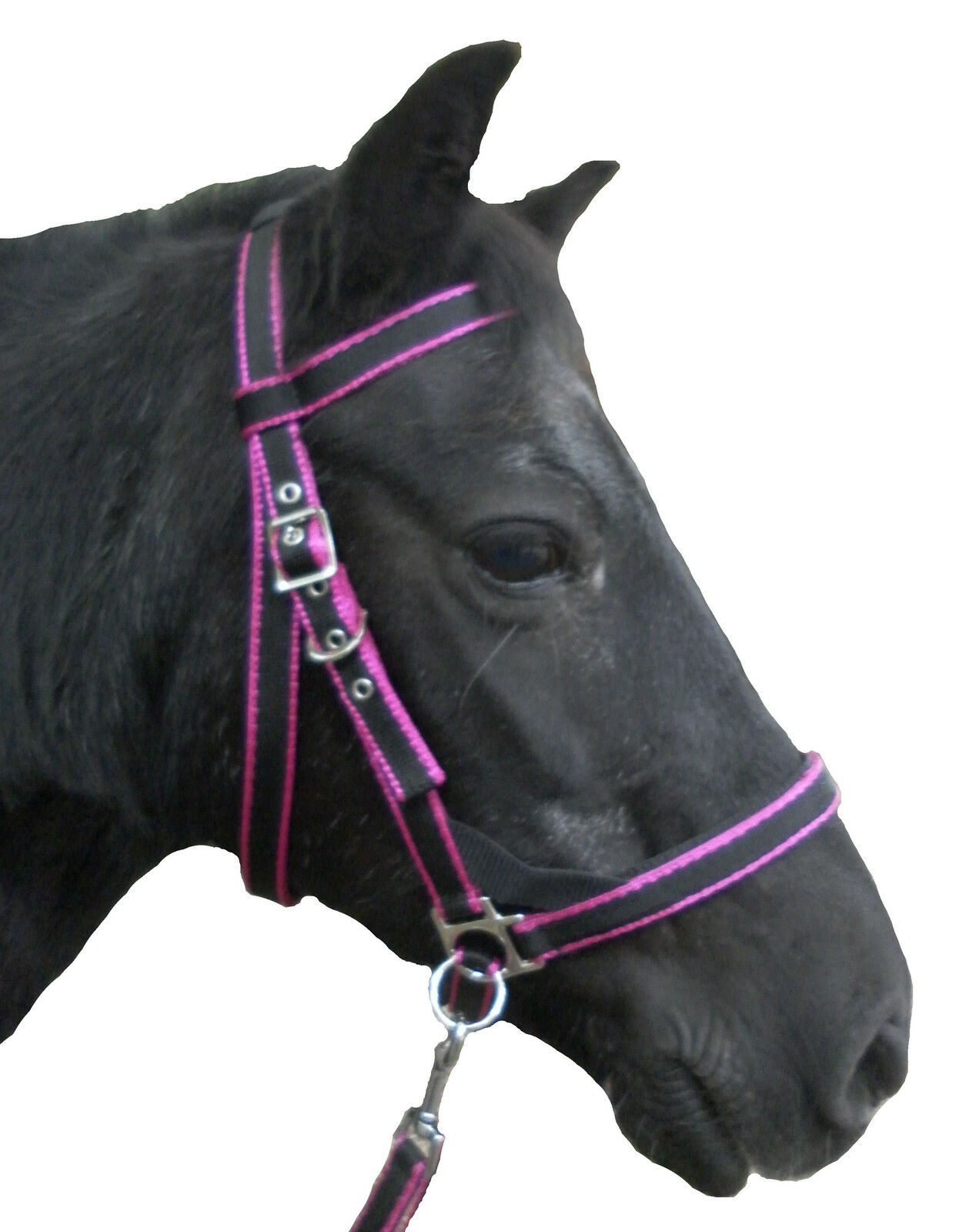 Official Libby's SCAWBRIG Bitless Bridle, Mini Small Pony, Pony Cob Full, X Full