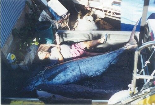 Hawaiian Big Game Trolling Lures Tuna//Marlin OP-7WK