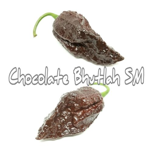 25+ Chocolate Bhutlah SM Pepper Seeds
