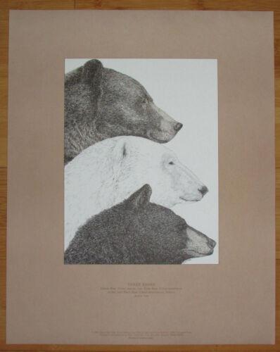 "Tyler 3 Bears Grizzly Polar Black 15/"" x 18/"" Maine Art Poster 1981 D D"