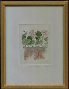 VINTAGE ORIGINAL ETCHING SWEET POTATOES BOTANICAL AP AQUARTI ITALY FRAMED PRINT