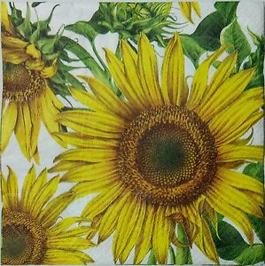 SUNFLOWER GARDEN 2 individual LUNCH SIZE paper napkins for decoupage 3-ply