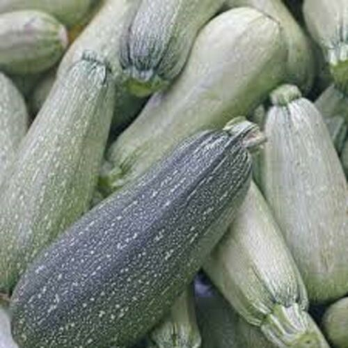 Organic Cocozelle or Italian Gray  or Golden Yellow Summer Squash Seeds