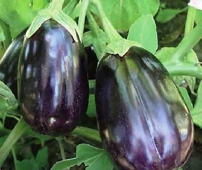 400 Seeds  Black Beauty  Eggplant Seeds  Non-GMO Heirloom  New seed for 2017