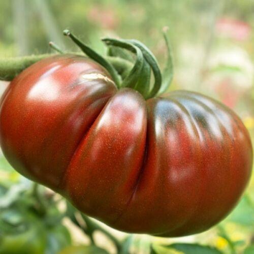 Kings Seeds 30 Seeds Tomato Black Russian