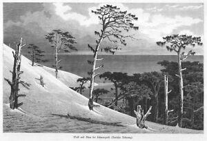 Adaptable Kurische Nehrung, Schwarzort, Forêt Et Dune, Original-gravure Sur Bois D'environ 1870-tich Von Ca. 1870 Fr-fr Afficher Le Titre D'origine