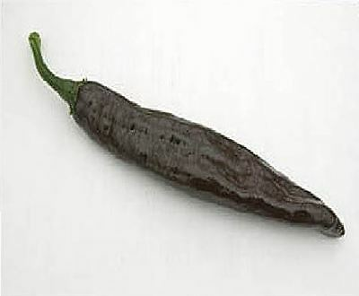 Vegetable - Pepper (Chilli) - Pasilla - 10 Seeds