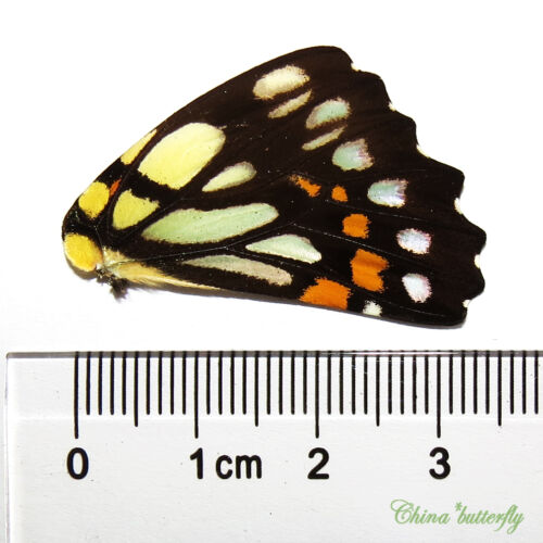 colorful lots REAL BUTTERFLY wing material  DIY artwork jewelry  #4